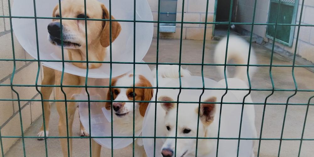 Canil Intermunicipal da AMTSM já esteriliza os seus animais